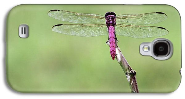 Preditor Galaxy S4 Cases - Red Dragonfly Dancer Galaxy S4 Case by Sabrina L Ryan