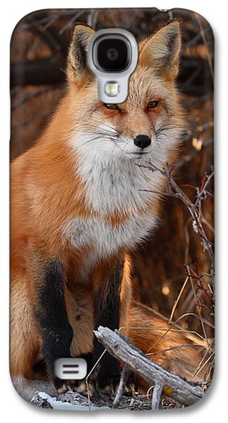 Red Fox Galaxy S4 Cases - Red Fox Pausing Atop Log Galaxy S4 Case by Max Allen