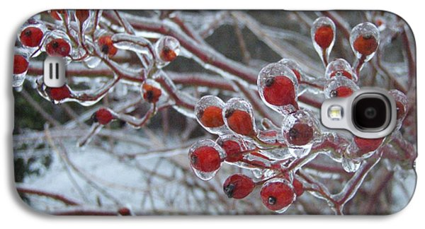 New England Galaxy S4 Cases - Red Ice Berries Galaxy S4 Case by Kristine Nora