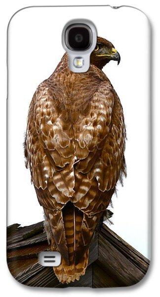 Red Tail Hawk Galaxy S4 Cases - Red Tail Hawk Galaxy S4 Case by Paul Marto