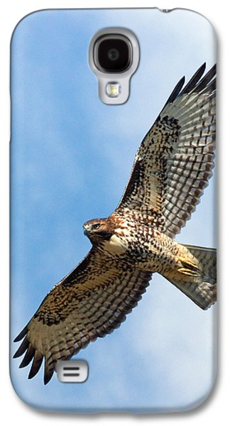 Red Tail Hawk Galaxy S4 Cases - Red Tail Hawk Galaxy S4 Case by Randall Ingalls