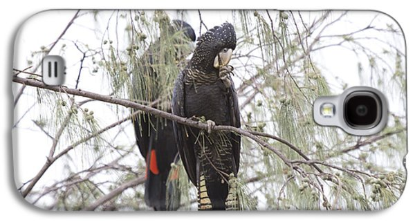 Red Tailed Black Cockatoos Galaxy S4 Case by Douglas Barnard