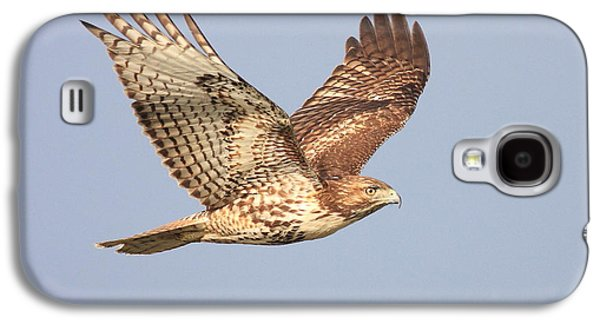 Red Tail Hawk Galaxy S4 Cases - Red Tailed Hawk 20100101-1 Galaxy S4 Case by Wingsdomain Art and Photography