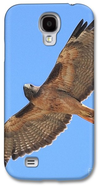 Wing Tong Galaxy S4 Cases - Red Tailed Hawk in flight Galaxy S4 Case by Wingsdomain Art and Photography