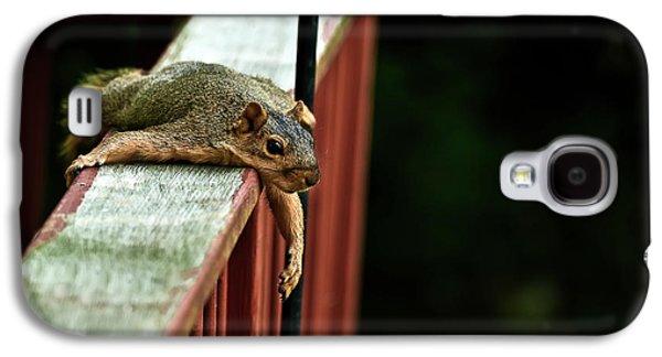 Fox Squirrel Galaxy S4 Cases - Resting Squirrel Galaxy S4 Case by  Onyonet  Photo Studios