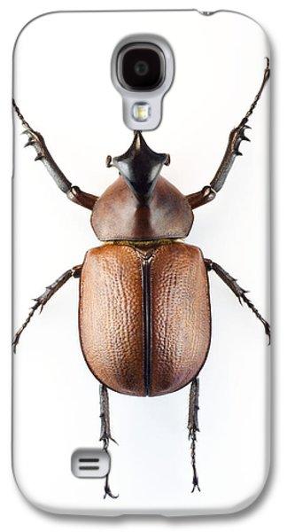 One Horned Rhino Galaxy S4 Cases - Rhinoceros Beetle Galaxy S4 Case by Lawrence Lawry