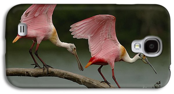Rosiette Spoonbills Galaxy S4 Case by Bob Christopher