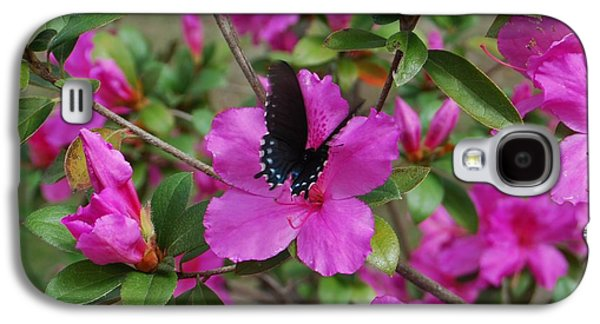 Butterfly Prey Galaxy S4 Cases - Safe Landing Galaxy S4 Case by Judy Hall-Folde