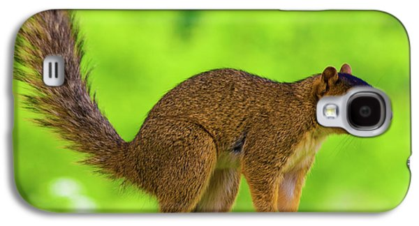 Fox Squirrel Galaxy S4 Cases - Sass Galaxy S4 Case by Betsy A  Cutler