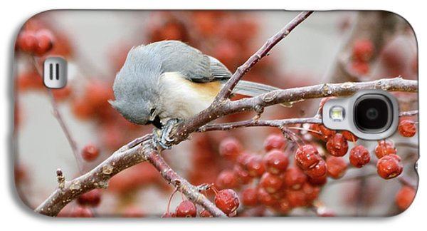 Tufted Titmouse Galaxy S4 Cases - Satisfaction Galaxy S4 Case by Betty LaRue