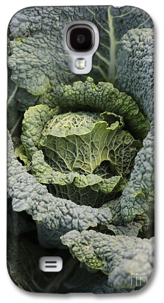 Food Stores Galaxy S4 Cases - Savoy Cabbage in the Vegetable Garden Galaxy S4 Case by Carol Groenen