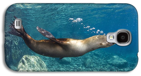 California Sea Lions Galaxy S4 Cases - Sea Lion Blowing Bubbles, Los Islotes Galaxy S4 Case by Todd Winner