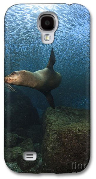 California Sea Lions Galaxy S4 Cases - Sea Lion Chasing A School Of Bait Fish Galaxy S4 Case by Todd Winner