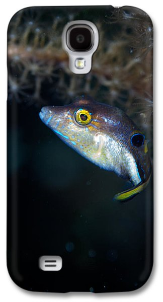 Porcupine Fish Galaxy S4 Cases - Sharp nosed puffer Galaxy S4 Case by Jean Noren