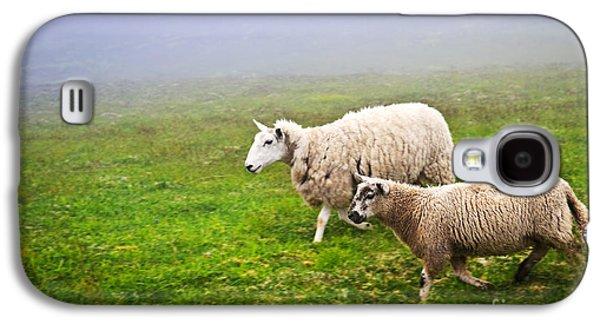 Field Photographs Galaxy S4 Cases - Sheep in misty meadow Galaxy S4 Case by Elena Elisseeva