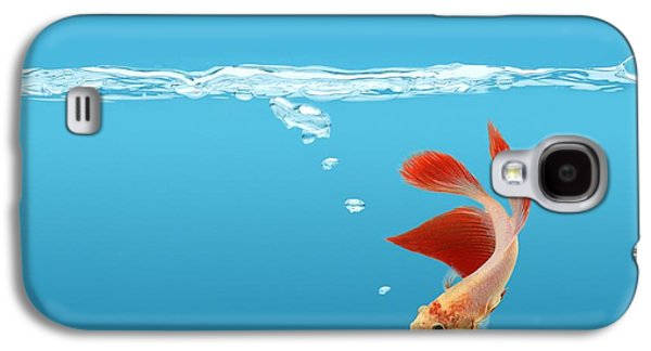 Betta Galaxy S4 Cases - Siamese Fighting Fish Betta Splendens Galaxy S4 Case by Don Hammond