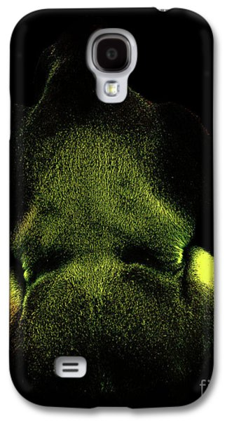 Ape Digital Art Galaxy S4 Cases - Silverback Gold . Photoart . R7917 Galaxy S4 Case by Wingsdomain Art and Photography