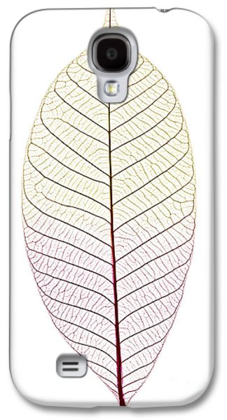 Skeleton Galaxy S4 Cases - Skeleton leaf Galaxy S4 Case by Elena Elisseeva