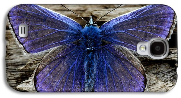 Small Photographs Galaxy S4 Cases - Small Blue Butterfly On A Piece Of Wood In Ireland Galaxy S4 Case by Pierre Leclerc Photography