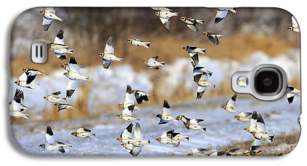 Snow Buntings Galaxy S4 Case by Tony Beck