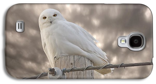 Snowy Digital Art Galaxy S4 Cases - Snowy Owl Saskatchewan Canada Galaxy S4 Case by Mark Duffy