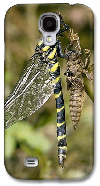 Sombre Galaxy S4 Cases - Sombre Goldenring Dragonfly Metamorphosis Galaxy S4 Case by Bob Gibbons
