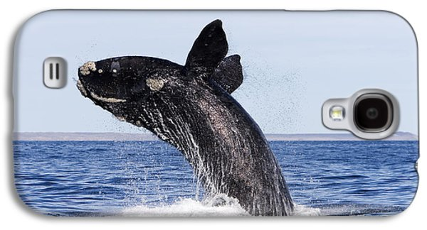 Ocean Mammals Galaxy S4 Cases - Southern Right Whale Galaxy S4 Case by Francois Gohier and Photo Researchers