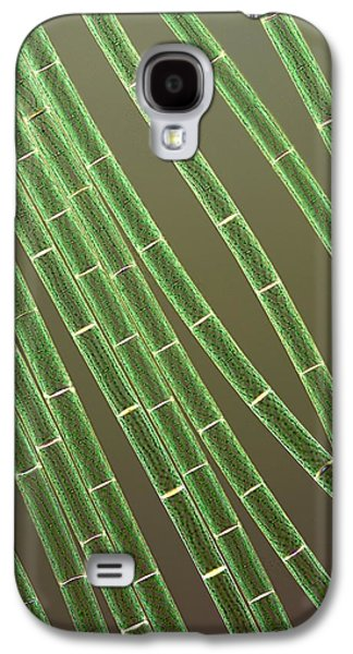 Microbiological Galaxy S4 Cases - Spirogyra Algae, Light Micrograph Galaxy S4 Case by Jerzy Gubernator