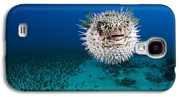 Porcupine Fish Galaxy S4 Cases - Spotted Porcupinefish II Galaxy S4 Case by Dave Fleetham