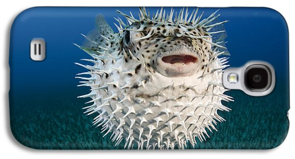 Porcupine Fish Galaxy S4 Cases - Spotted Porcupinefish III Galaxy S4 Case by Dave Fleetham