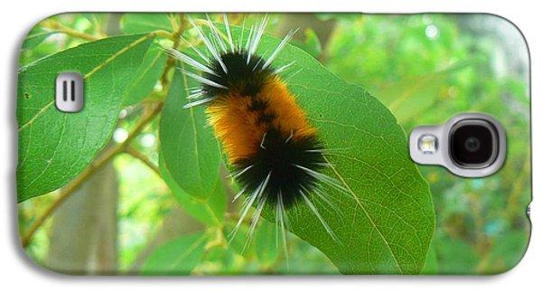 Buy Galaxy S4 Cases - Spotted Tussock  Galaxy S4 Case by Pamela Patch