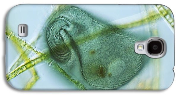 Photosynthetic Galaxy S4 Cases - Stentor Coeruleus Protozoan, Micrograph Galaxy S4 Case by Frank Fox
