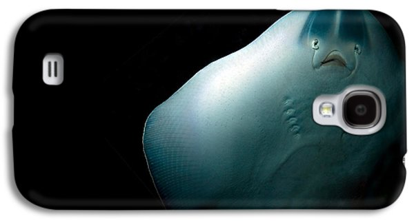 Ghostly Galaxy S4 Cases - Stingray Galaxy S4 Case by Jane Rix