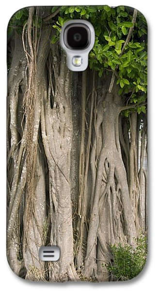 Engulfing Galaxy S4 Cases - Strangler Fig (ficus Aurea) Galaxy S4 Case by Bob Gibbons