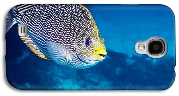 Under Water. Nature Galaxy S4 Cases - Streaked Spinefoot Fish Galaxy S4 Case by Georgette Douwma
