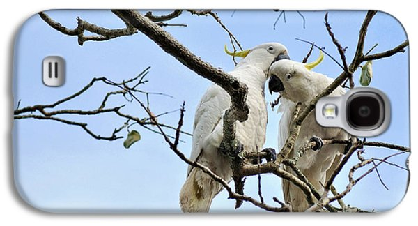 Sulphur Crested Cockatoos Galaxy S4 Case by Kaye Menner