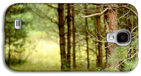 Photography Glass Art Galaxy S4 Cases - Summer Forest. Pine Trees Galaxy S4 Case by Jenny Rainbow