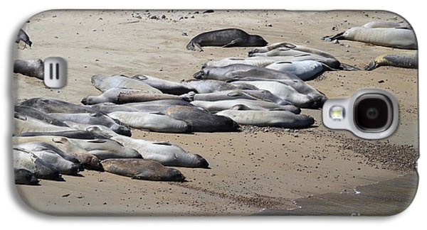 Elephant Seals Galaxy S4 Cases - Sunbathing Elephant Seals Along A Beach At Point Reyes California . 7D16063 Galaxy S4 Case by Wingsdomain Art and Photography