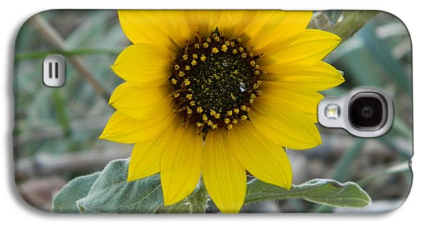 Best Sellers -  - Fort Collins Galaxy S4 Cases - Sunflower Smile Galaxy S4 Case by Sara  Mayer