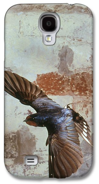 Hirundo Galaxy S4 Cases - Swallow In Flight Galaxy S4 Case by Andy Harmer
