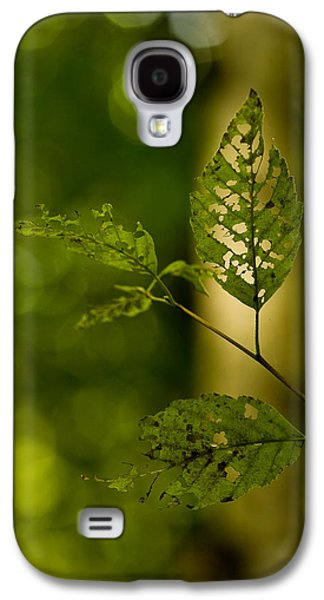 Torn Galaxy S4 Cases - Tattered Leaves Galaxy S4 Case by Mike Reid