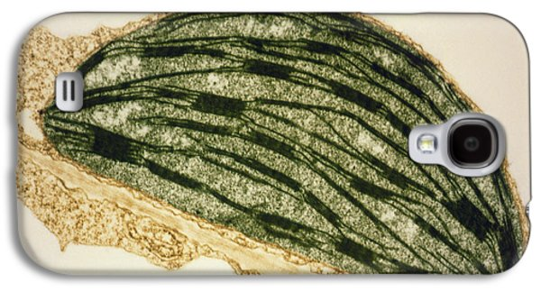 Tem Galaxy S4 Cases - Tem Of A Chloroplast From A Tobacco Leaf Galaxy S4 Case by Dr Jeremy Burgess