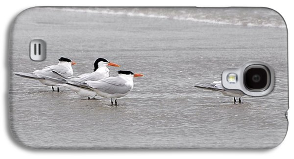 Tern Galaxy S4 Cases - Terns Wading Galaxy S4 Case by Al Powell Photography USA