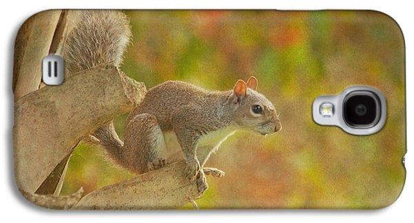 Fox Squirrel Galaxy S4 Cases - The Climber Galaxy S4 Case by Kim Hojnacki