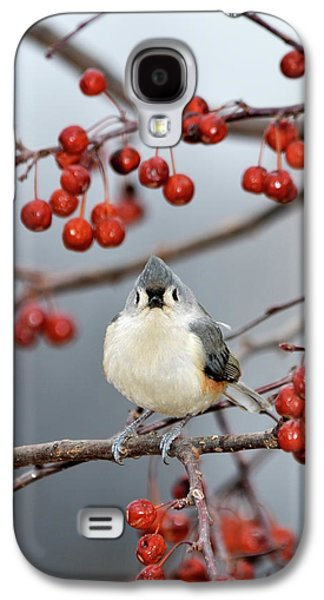 Tufted Titmouse Galaxy S4 Cases - The Color Red Galaxy S4 Case by Betty LaRue