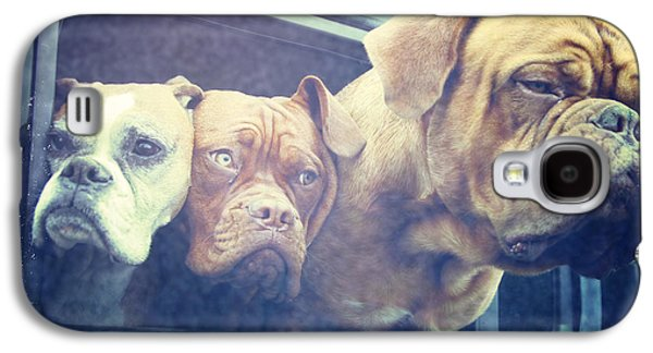 Boxer Galaxy S4 Cases - The Dog Taxi Is A Hummer Galaxy S4 Case by Nina Prommer