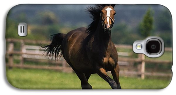 Pastureland Galaxy S4 Cases - Thoroughbred Horses, Yearlings Galaxy S4 Case by The Irish Image Collection