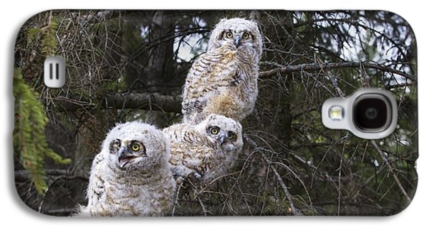 Three Chicks Galaxy S4 Cases - Three Great Horned Owl Bubo Virginianus Galaxy S4 Case by Richard Wear
