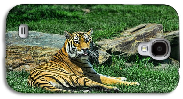 The Tiger Galaxy S4 Cases - Tiger - Endangered - lying down - tongue out Galaxy S4 Case by Paul Ward