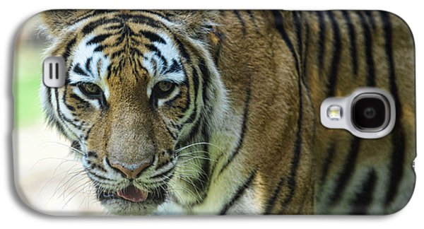 The Tiger Galaxy S4 Cases - Tiger - Endangered - Wildlife Rescue Galaxy S4 Case by Paul Ward